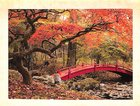 Boxed Cards: Sojourn of the Soul, Japanese Garden