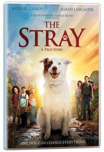 Scr the Stray Screening Licence Standard