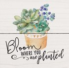 Magnet: Bloom Where You Are Planted, Succulents in Pot Novelty